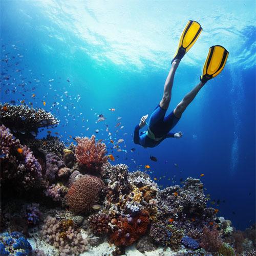 AUSTRALIA BLUE montes diving