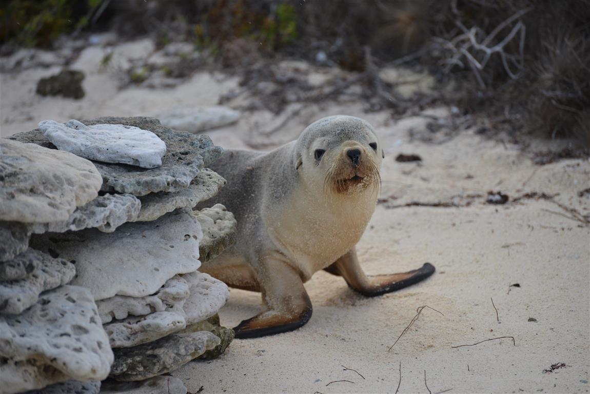 SOUTHERN IMAGE seal