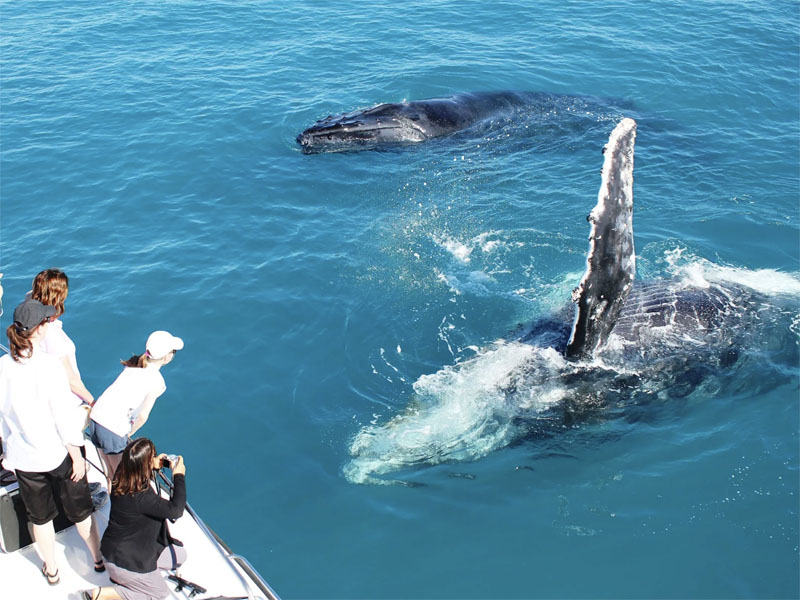 Whale watching interaction tours people on deck perth wa