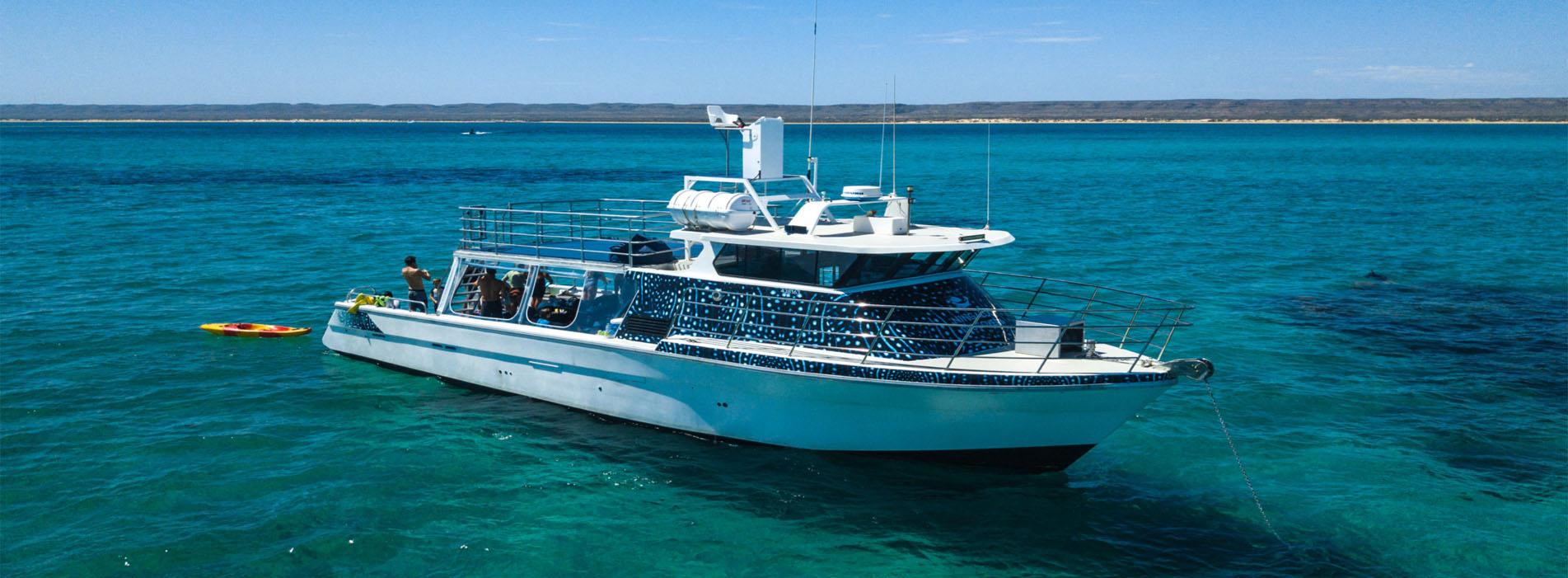 INVESTIGATOR whaleshark swimmers Ningaloo Reef Exmouth