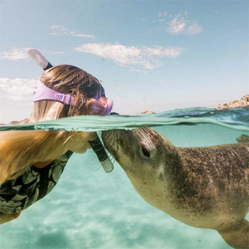 SEAL KISSING GIRL CARNAC ISLAND CRUISES